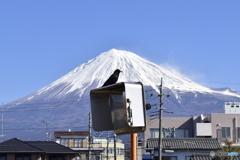 1・富士、2・鷹×→カラス○、3・,,,?