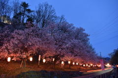 夜桜と光跡