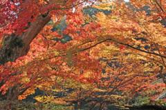流れる紅葉