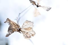季節外れの蝶が舞う