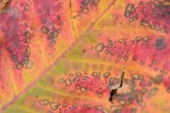カラフル落ち葉