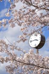 時計もお花見 縦