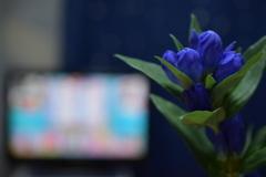 暮らしと花