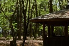 木洩れ日の森