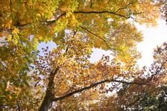 秋色 空一杯