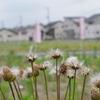 雑草と新興住宅地