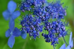 藍の炸裂☆☆