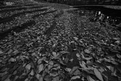 木枯らしのステージ