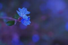 深~い海に咲く花