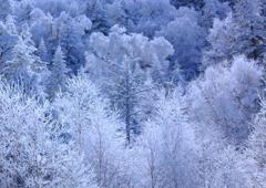 白い森の妖精
