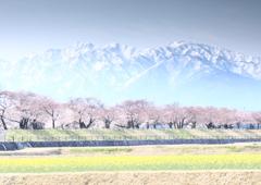 立山連峰の春