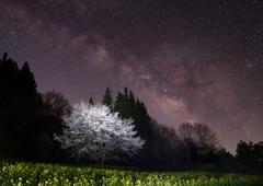 暁春の夜の夢
