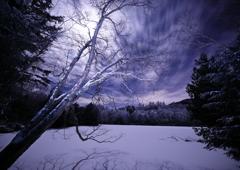 月夜の晩に森を訪ねて