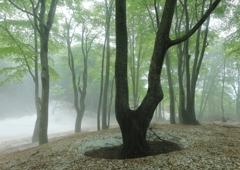 鍋倉山の森の新緑