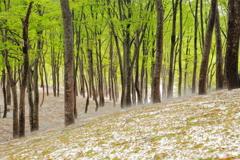 鍋倉山の新緑
