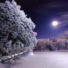 冬の月夜はあら楽し