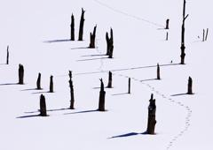 雪上自然アート