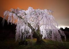 ある春の妖艶な春の夜