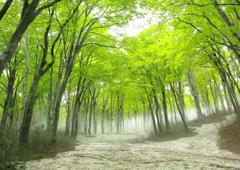 鍋倉高原の新緑