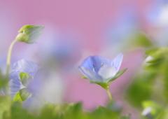 Spring light blue