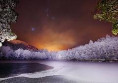 白い森とオリオンの夜