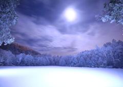 白い森と月の夜