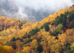 秋深し森の中