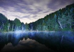 星空と静寂の森