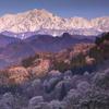 鹿島槍と朝陽を浴びる山桜