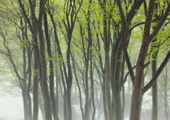 魅惑の森の中