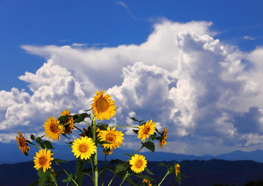 夏の昼下がり、遠くで風が吹いている