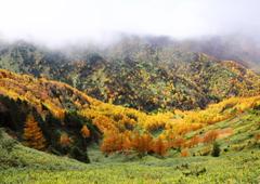 wood's in autumn