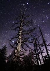厳冬の星空