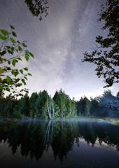 静かな森の夜