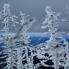 樹氷のむこう