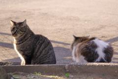 ■2020-02-24_猫 (89)