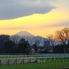 ■2020-02-15_東京競馬場 (99)