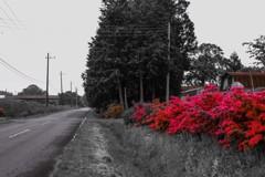 花のある牧場
