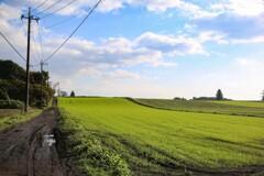 牧草沿いの道