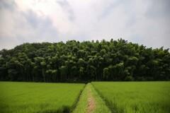 沸き立つ林