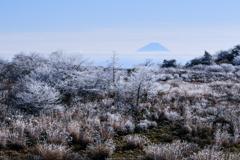 霧氷の草木と遠い富士