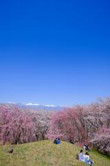 弘法山古墳の春