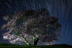 一本桜と星の軌跡