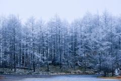 14時半の霧氷