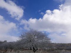 雪纏う木と青空