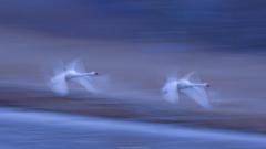 流し鳥(撮り)