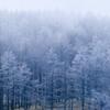 舞う雪と樹氷
