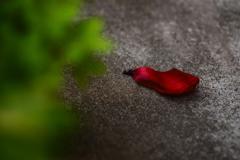 紅い花びら。
