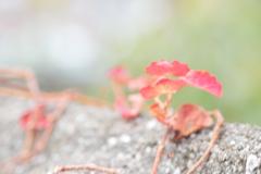 塀際の秋。