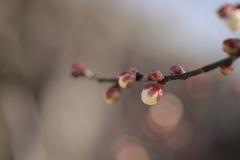 春が来る…。